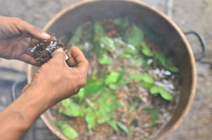 Making the Ayahuasca Potion