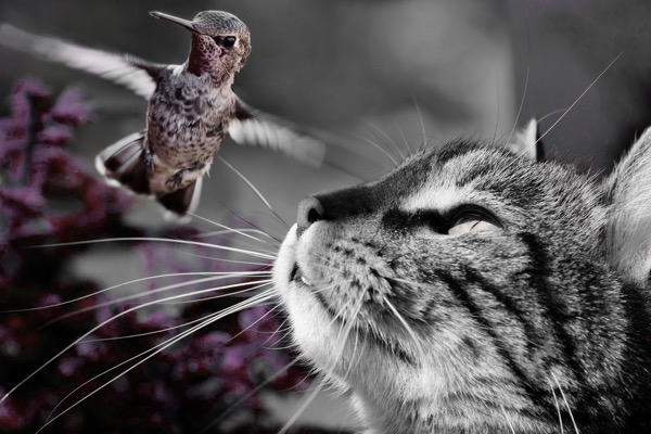 cat-861105_1920